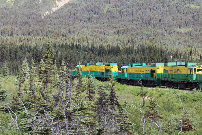 Green and yellow train riding through the forest.